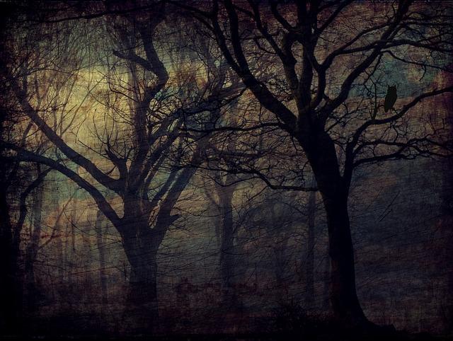 forest Quelle: pixabay - cocoparisienne
